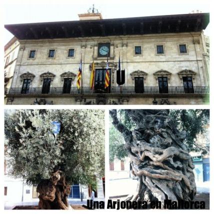 ayuntamiento y olivo.jpg